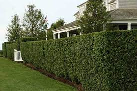 Marge and Mark were on opposite sides of the hedge, feeling torn down